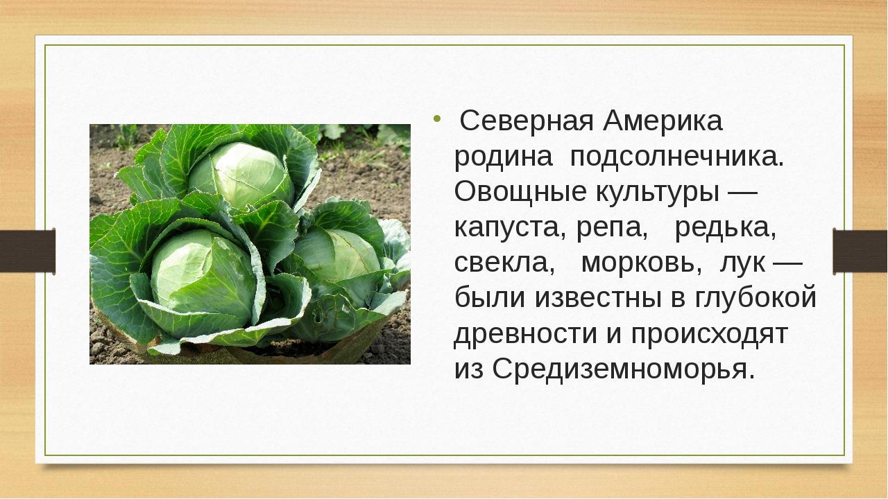 Северная Америка родина подсолнечника. Овощные культуры — капуста, репа, ред...