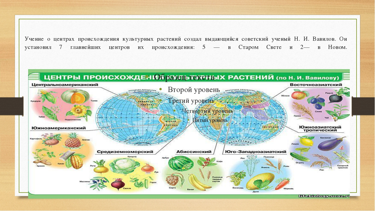 Учение о центрах происхождения культурных растений создал выдающийся советск...