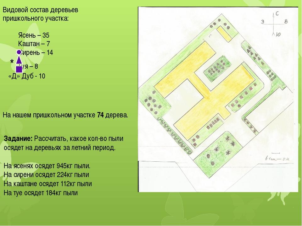 Видовой состав деревьев пришкольного участка: Ясень – 35 Каштан – 7 Сирень –...