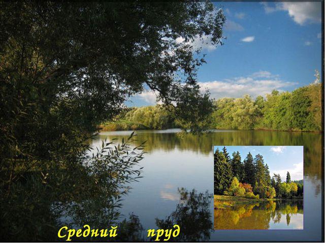 Средний пруд