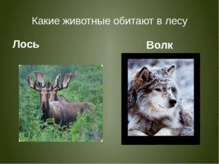 Какие животные обитают в лесу Лось Волк