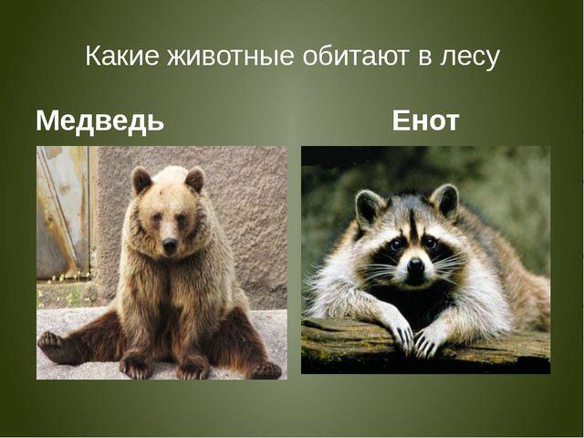 Какие животные обитают в лесу Медведь Енот