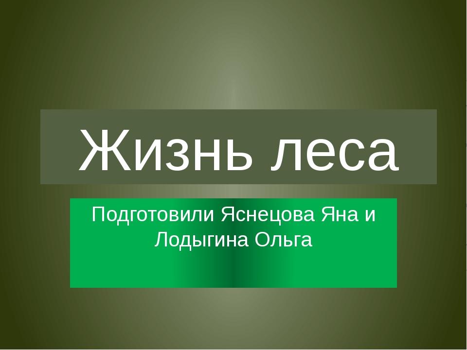 Жизнь леса Подготовили Яснецова Яна и Лодыгина Ольга