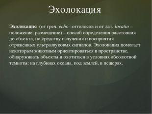 Эхолокация Эхолокация (от греч. еcho –отголосок и от лат. locatio – положение