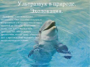 Ультразвук в природе. Эхолокация. Дельфины тоже используют эхолокацию. Они сп