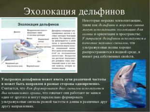 Эхолокация дельфинов Некоторые морские млекопитающие, такие как дельфины и мо