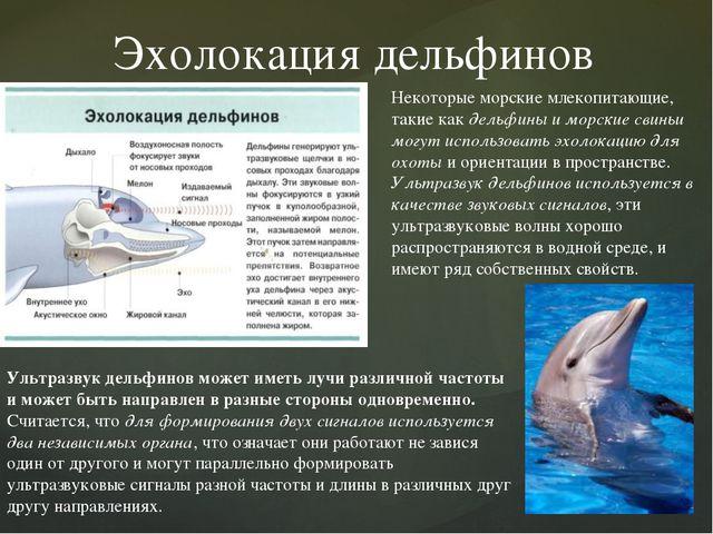 Эхолокация дельфинов Некоторые морские млекопитающие, такие как дельфины и мо...