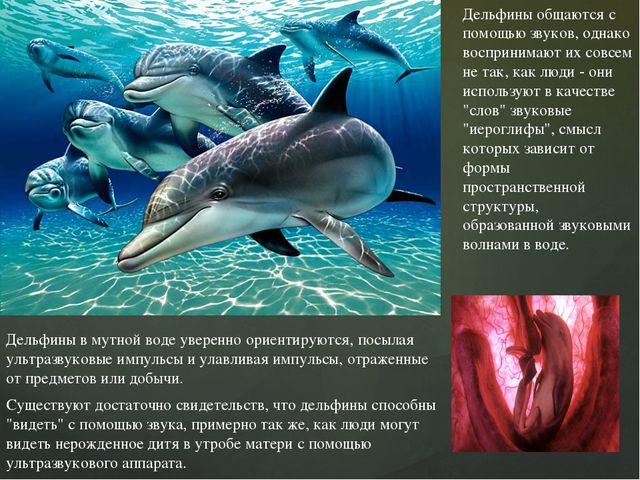 Дельфины общаются с помощью звуков, однако воспринимают их совсем не так, как...