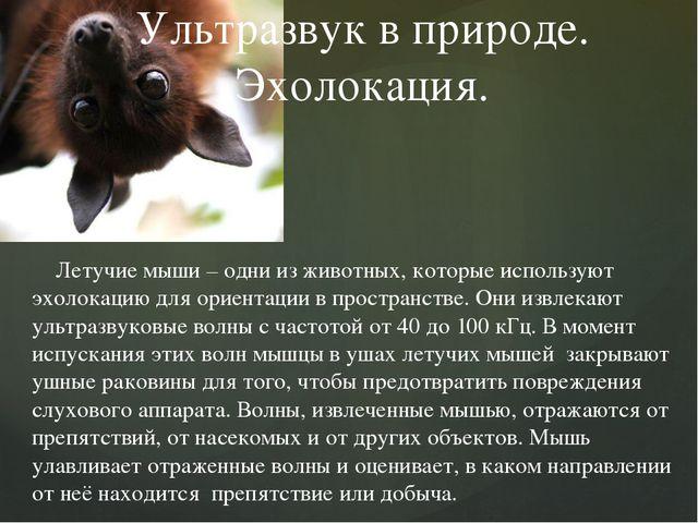 Летучие мыши – одни из животных, которые используют эхолокацию для ориентаци...
