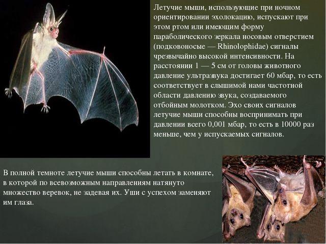 Летучие мыши, использующие при ночном ориентировании эхолокацию, испускают пр...