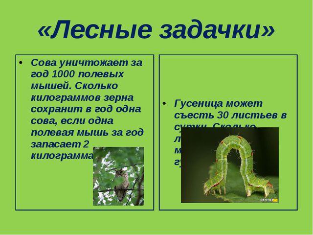 «Лесные задачки» Гусеница может съесть 30 листьев в сутки. Сколько листьев в...