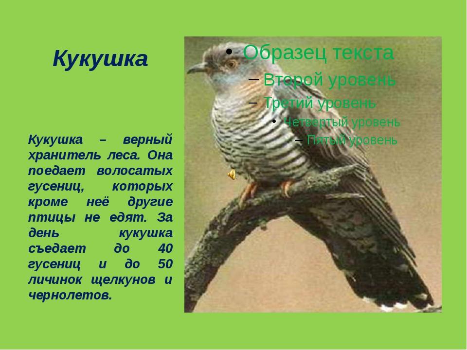 Кукушка Кукушка – верный хранитель леса. Она поедает волосатых гусениц, котор...