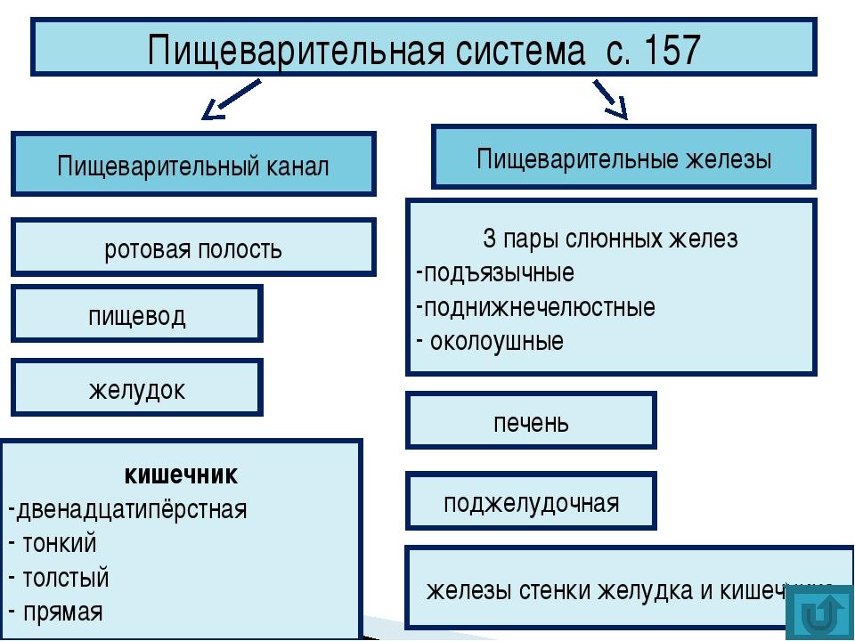 Пищеварительная система с. 157 Пищеварительные железы Пищеварительный канал р...