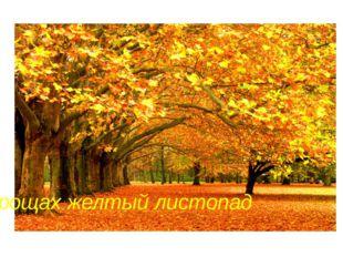 В рощах желтый листопад