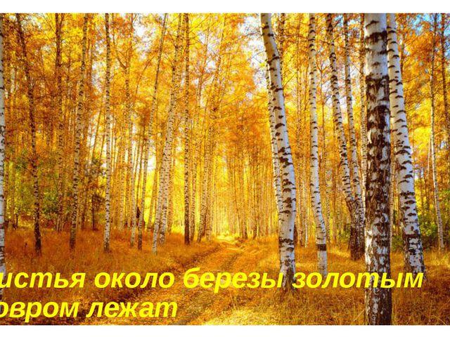 Листья около березы золотым ковром лежат