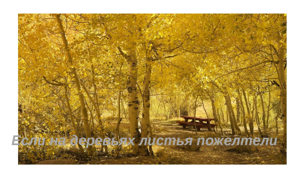 Если на деревьях листья пожелтели
