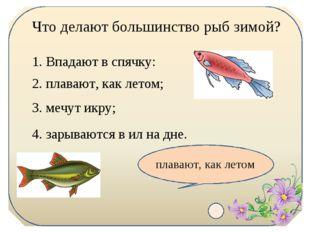 Что делают большинство рыб зимой? 1. Впадают в спячку: 2. плавают, как летом;