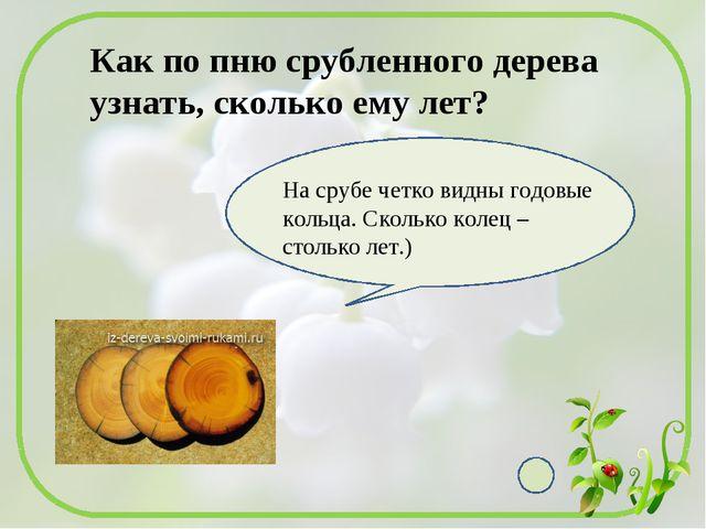 Как по пню срубленного дерева узнать, сколько ему лет? На срубе четко видны...