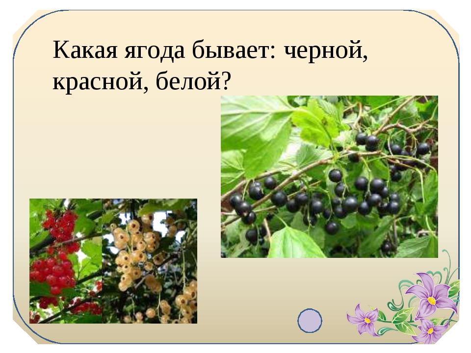 Какая ягода бывает: черной, красной, белой?