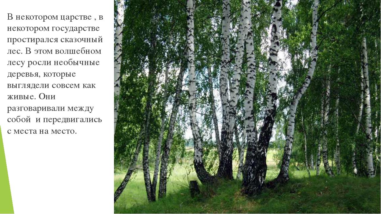 В некотором царстве , в некотором государстве простирался сказочный лес. В эт...