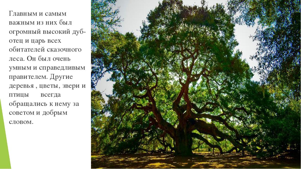 Главным и самым важным из них был огромный высокий дуб- отец и царь всех обит...