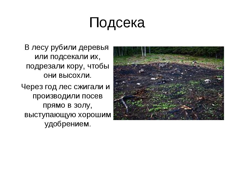 Подсека В лесу рубили деревья или подсекали их, подрезали кору, чтобы они выс...