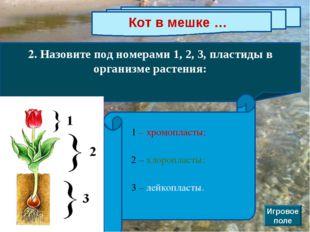 Кот в мешке … 2. Назовите под номерами 1, 2, 3, пластиды в организме растения