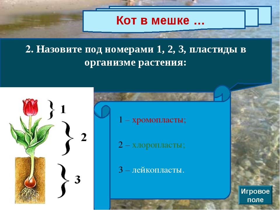 Кот в мешке … 2. Назовите под номерами 1, 2, 3, пластиды в организме растения...