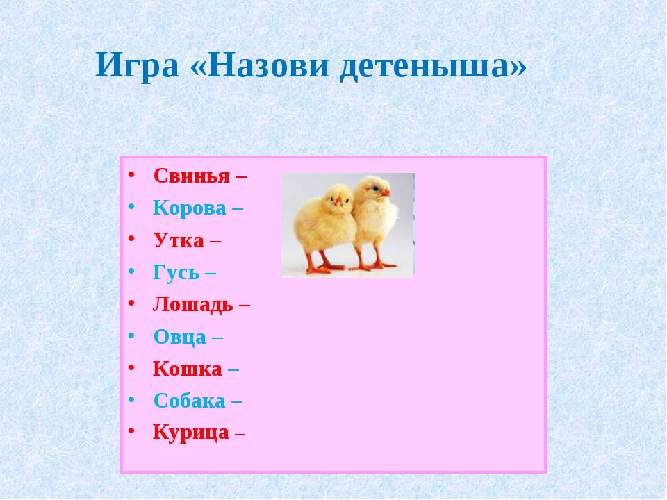 Игра «Назови детеныша» Свинья – Корова – Утка – Гусь – Лошадь – Овца – Кошка...