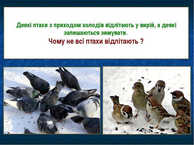 Деякі птахи з приходом холодів відлітають у вирій, а деякі залишаються зимува...