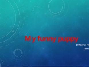 My funny puppy Shestunov miron, Form: 3C