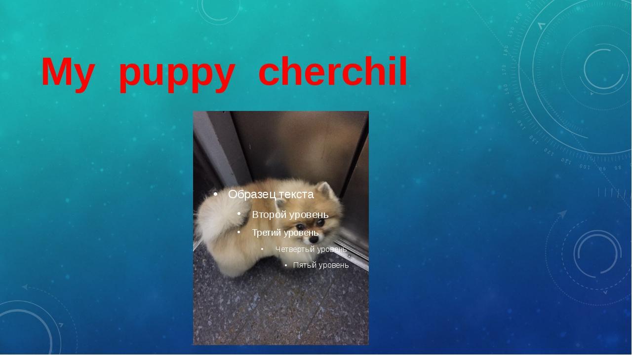 My puppy cherchil
