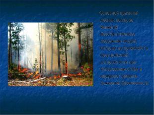 Основной причиной лесных пожаров является безответственное поведение людей,