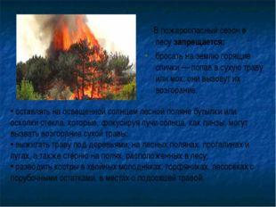 В пожароопасный сезон в лесу запрещается: бросать на землю горящие спички —