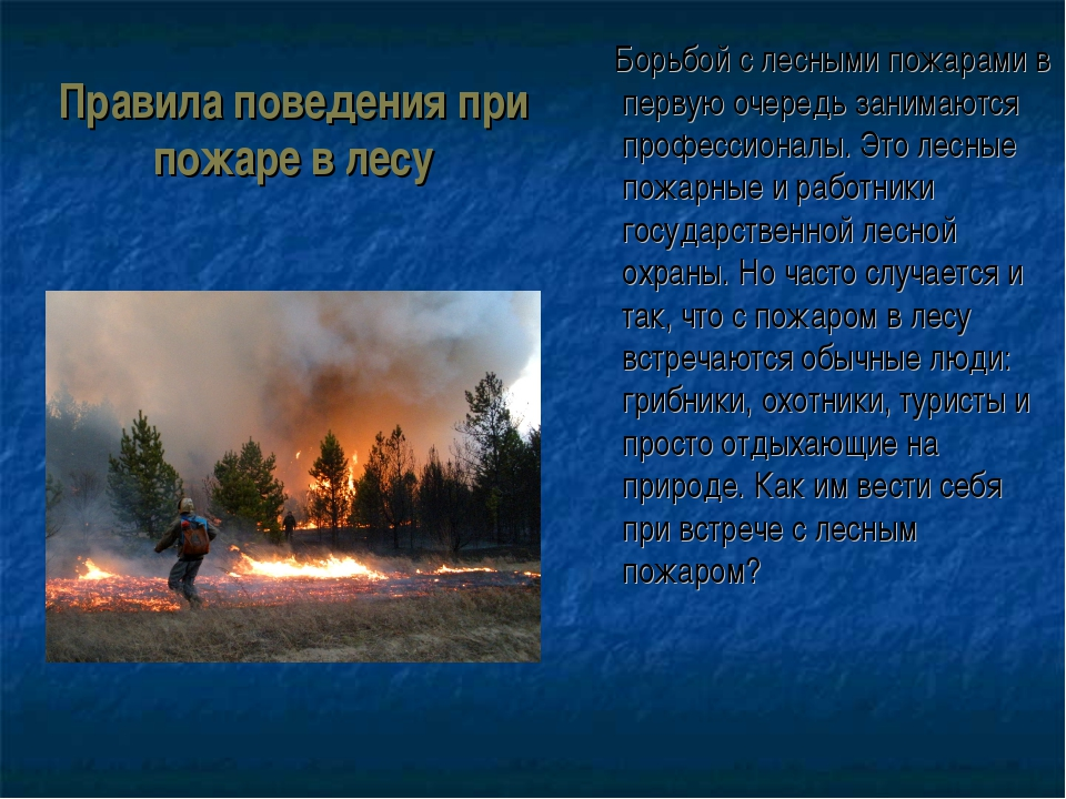 Правила поведения при пожаре в лесу Борьбой с лесными пожарами в первую очере...
