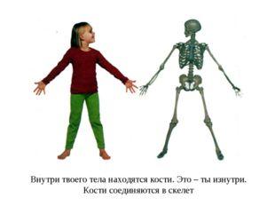 Внутри твоего тела находятся кости. Это – ты изнутри. Кости соединяются в ске