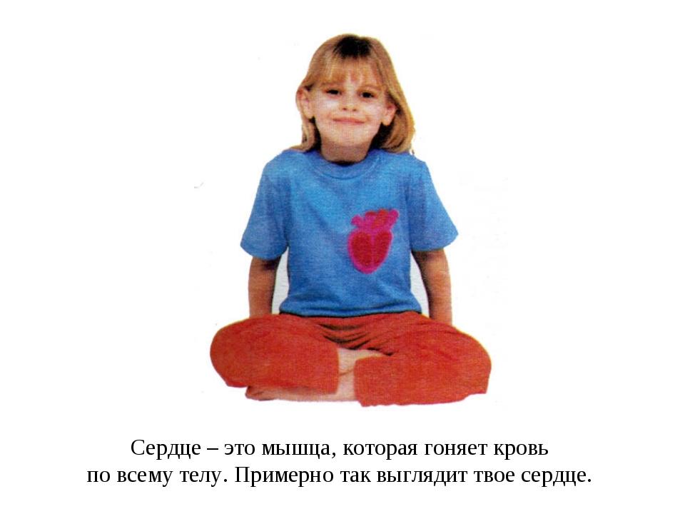 Сердце – это мышца, которая гоняет кровь по всему телу. Примерно так выглядит...