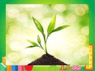 Вопрос 1 Ботаника – наука о растениях Что изучает БОТАНИКА?