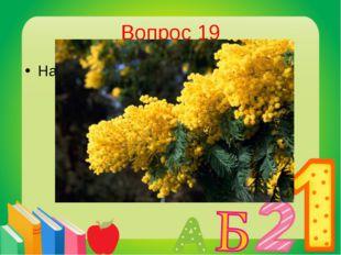 Вопрос 19 Назовите цветок - символ 8 Марта? Мимоза