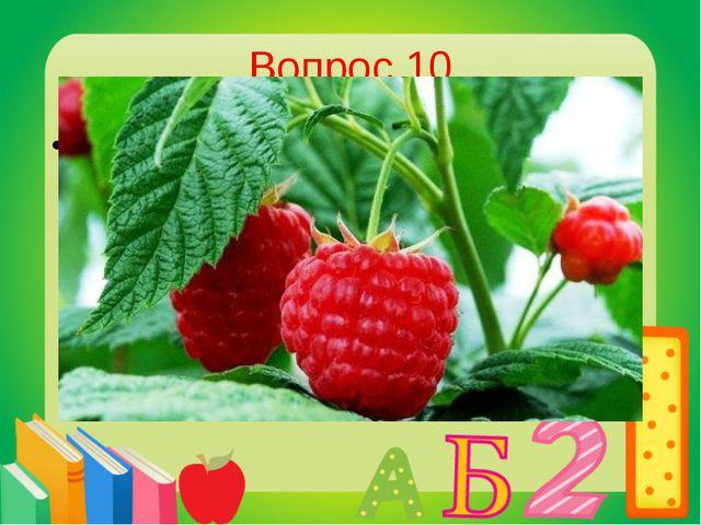 Вопрос 10 Кустарник,ягоды которого очень любит медведь. Малина