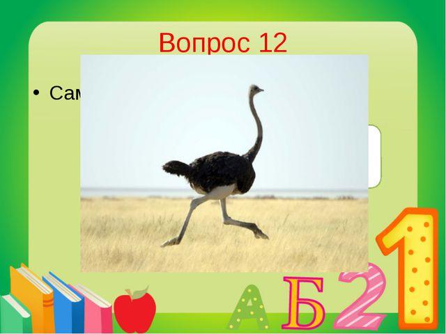 Вопрос 12 Самая большая птица в мире? Страус