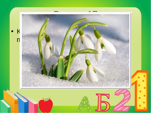 Вопрос 17 Какой цветок зацветает весной первым? Подснежник