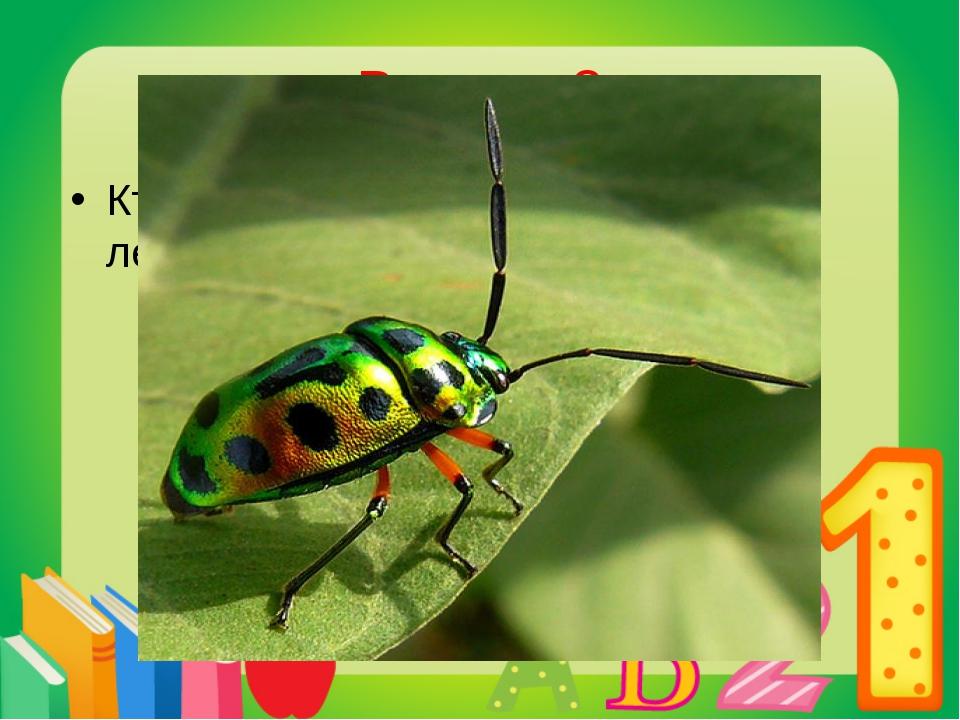 Вопрос 3 Кто раньше просыпается весной: летучие мыши или насекомые? Насекомые