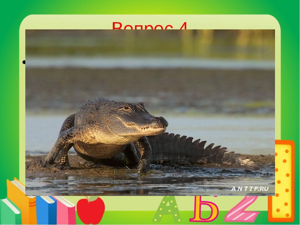 Вопрос 4 Американский крокодил. Аллигатор