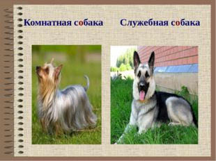 Комнатная собака Служебная собака