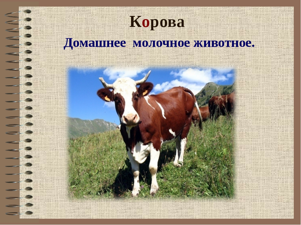 Корова Домашнее молочное животное.