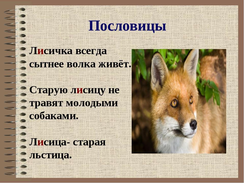 Пословицы Лисичка всегда сытнее волка живёт. Старую лисицу не травят молодыми...