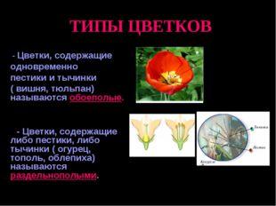 ТИПЫ ЦВЕТКОВ - Цветки, содержащие одновременно пестики и тычинки ( вишня, тю