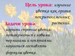 Цель урока: изучение цветка как органа покрытосеменных растений. Задачи урок