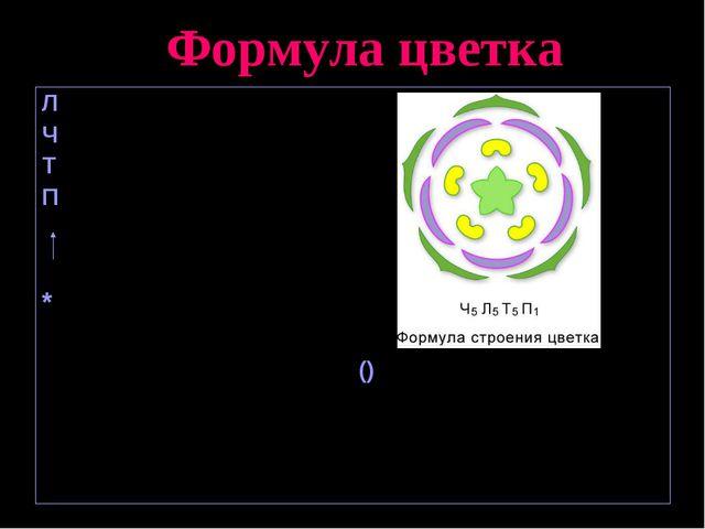 Формула цветка Л – лепесток, Ч – чашечка, Т – тычинка, П – пестик (и), - непр...